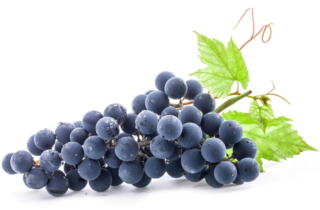 Dark-Grapes-Photo-C